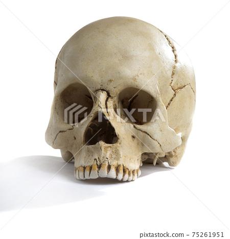 Human skull on isolated white background 75261951
