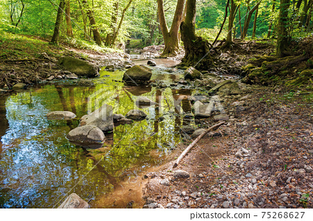 wild water stream in the forest. beautiful nature scenery on a sunny spring day. trees in vivid green foliage. stones on the shore. freshness of nature concept 75268627