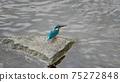 Kingfisher 1 75272848