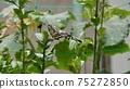 Swallowtail butterfly 75272850