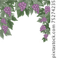 Decorations of red grapes natural background 75274235