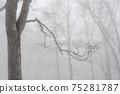 겨울 너도밤 75281787