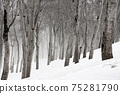 잔설의 너도밤 나무 숲 75281790