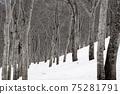 잔설의 너도밤 나무 숲 75281791