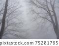 겨울 너도밤 75281795
