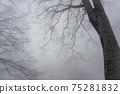 겨울 너도밤 75281832