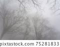 겨울 너도밤 75281833
