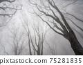 겨울 너도밤 75281835