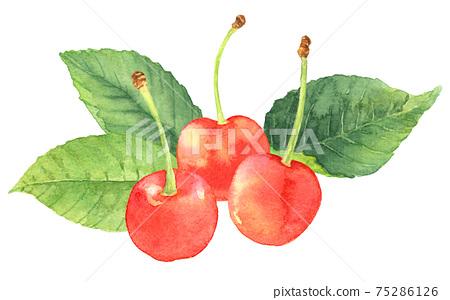水彩的櫻桃cherries_3用樹葉 75286126