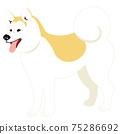 秋田犬側身站立,伸出舌頭 75286692