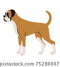 站立的拳擊手狗的側視圖 75286697