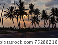 Palm tree silhouettes against cloudy sky at sunset 75288218