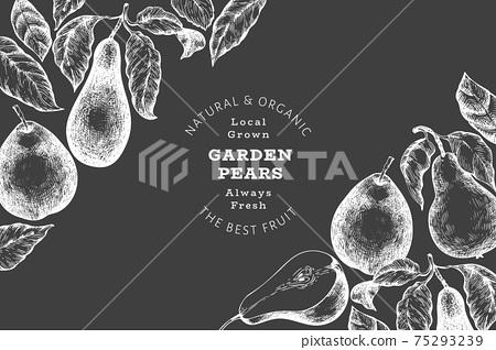 Pear design template. Hand drawn vector garden fruit illustration on chalk board. Retro botanical banner. 75293239