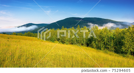 grassy meadow in mountains. fog rolling through the valley above the distant forest. beautiful rural landscape on the summer morning. sunny weather with blue sky 75294605