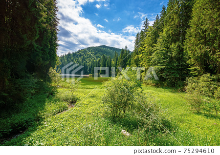 mountain lake landscape in summer. beautiful scenery of synevyr national park, ukraine. body of water among the forest. great view and amazing attarction of carpathian nature. travel europe concept 75294610
