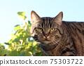 Domestic cat 75303722