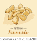 Hand drawn colorful Pine nuts isolated on background 75304200