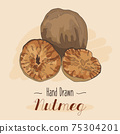 Hand drawn colorful Nutmeg isolated on background 75304201