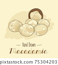 Hand drawn colorful Macadamia nuts isolated on background. 75304203