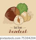 Hand drawn colorful Hazelnut isolated on background. 75304204