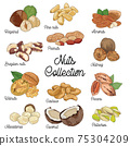 Hand drawn colorful Nuts Collection Hazelnut Pine nuts Almonds Brazilian nuts Peanuts Nutmeg Walnuts Cashew Pecans Macadamia Coconut and Pistachios 75304209