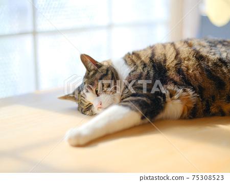 Cat on the windowside 75308523