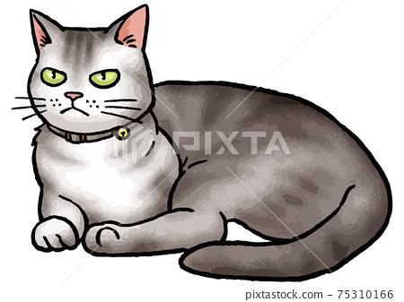 [手繪矢量動物插圖素材]坐在貓(美國短毛貓)的插圖 75310166