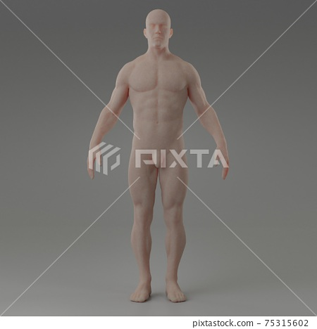 3d rendering illustration of muscle 75315602