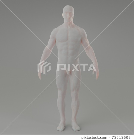 3d rendering illustration of muscle 75315605