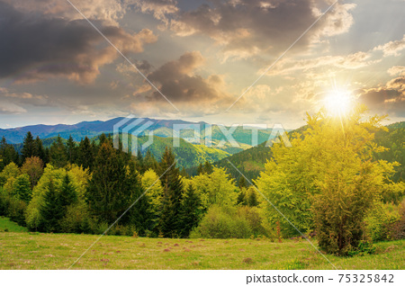 forest on the grassy meadow in mountains at sunset. beautiful countryside landscape in evening light. clouds on the blue sky above the distant borzhava ridge. spring adventures in carpathians 75325842