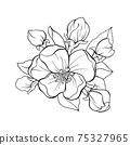 Japanese apple tree flower bouquete contour drawing 75327965