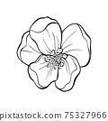 Japanese apple tree flower head contour drawing 75327966
