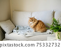Ginger cat sitting on sofa at home 75332732