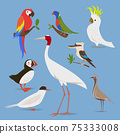 Vector illustration of birds from different continents 75333008