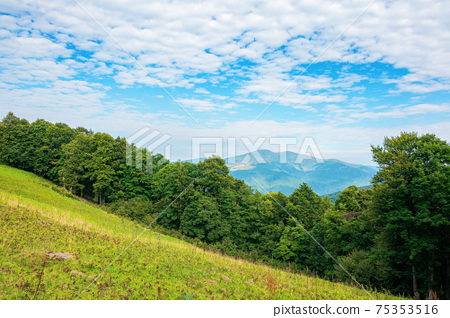 summer landscape of carpathian mountains. beautiful scenery in the morning. beech forest and grassy alpine meadows on the hills of chornohora ridge. bright sunny weather with fluffy clouds on the sky 75353516