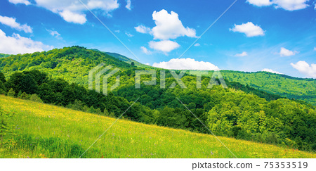 rural landscape of ukrainian carpathians. beautiful summer scenery in mountains. green grassy meadow by the forest on the hill. mountain peak beneath a sky with fluffy clouds on a sunny day 75353519