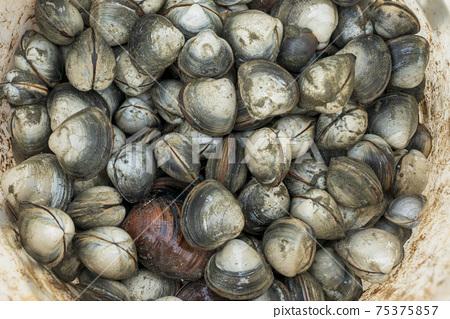 貝類 75375857