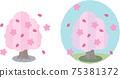 春天櫻花樹 75381372
