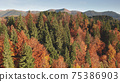 Colorful autumn leaf mountain forest aerial. Nobody nature landscape. Unexplored wildlife scenery 75386903