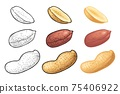 Whole and half peanut seed with and without shell. Vector engraving 75406922