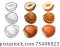 Set whole and half hazelnut. Vector color engraving vintage illustration. 75406923