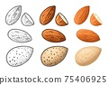 Two whole almonds nuts without shell. Vector color vintage engraving 75406925