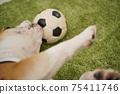 영어 불독 강아지 축구 의상 아르헨티나 대표 10 번 사진 237 75411746