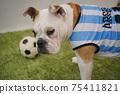 영어 불독 강아지 축구 의상 아르헨티나 대표 10 번 사진 245 75411821