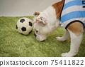 영어 불독 강아지 축구 의상 아르헨티나 대표 10 번 사진 246 75411822