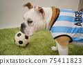 영어 불독 강아지 축구 의상 아르헨티나 대표 10 번 사진 247 75411823