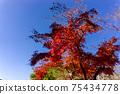 Autumn leaves 75434778