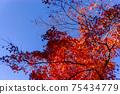 Autumn leaves 75434779