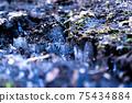 Frost pillar 75434884