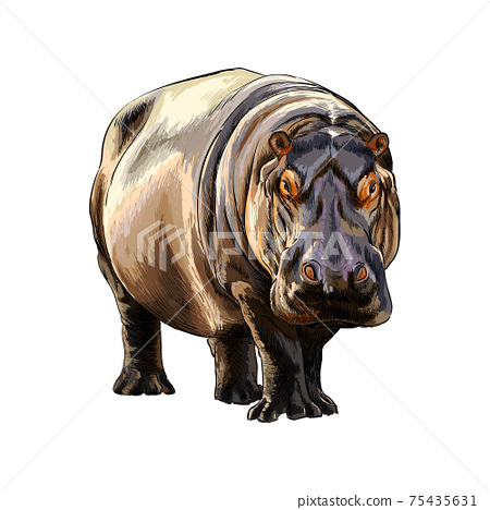 Hippopotamus from a splash of watercolor, colored drawing, realistic 75435631